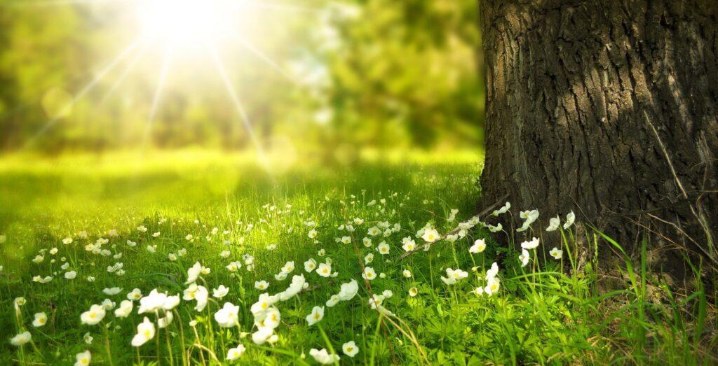 Eine blühende Wiese am Fuße eines Baumes.